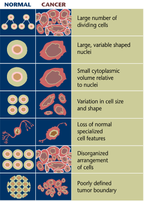 Comparison of health and cancer cells